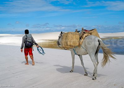 Lencois Maranhenses, trek avec mules dans les dunes