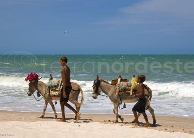 Prea Jericoacoara, mules sur la plage