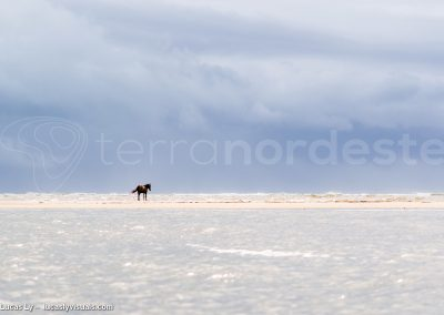 Bresil, Bahia - Canavieras, cheval sur la plage