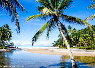 Bresil, Bahia Itacaré - Foret embouchure atlantique
