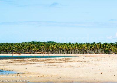 Boipeba, Brésil - plage sauvage et palmiers