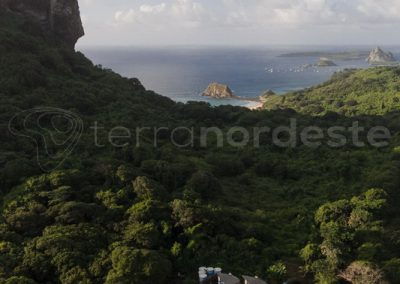 bresil-fernando-noronha-vegetation