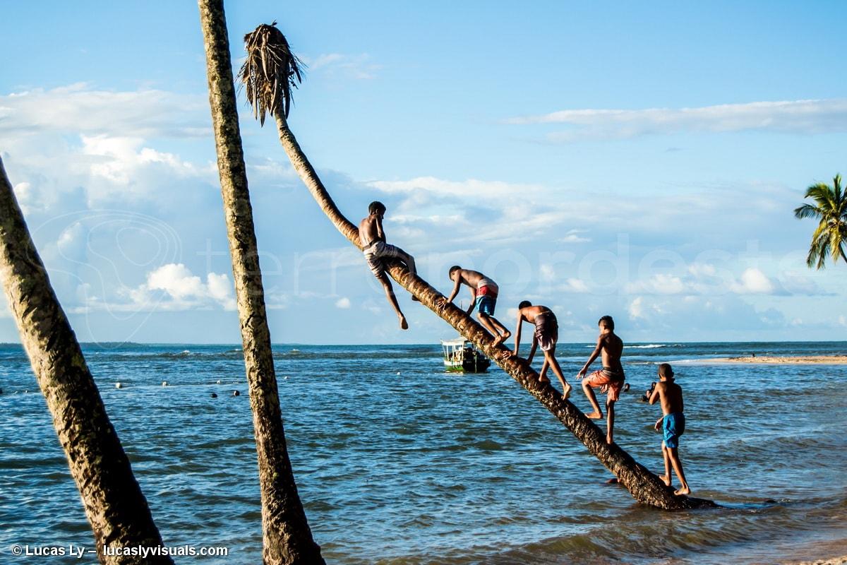 Brésil Ilha Boipeba - Plage et palmiers