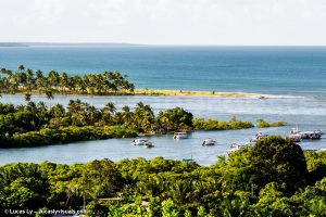 Brazil Ilha Boipeba - abundant vegetation, ocean