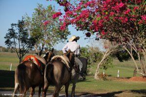 Brésil, Pantanal - Cowboy et chevaux race Pantaneira