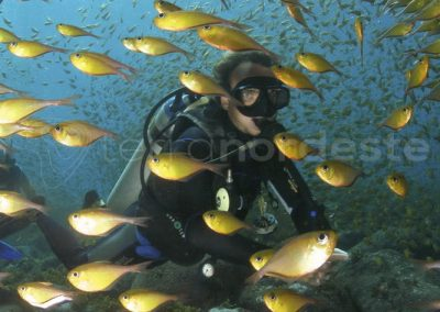 Fernando de Noronha - Plongée poissons colorés