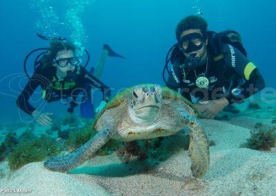 Fernando de Noronha - plongée avec les tortues